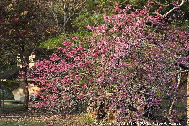 桜便り 第2弾  ☆ ハプニング♪_c0139375_13574522.jpg