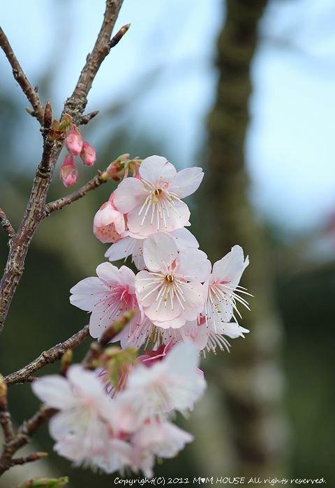 桜便り 第2弾  ☆ ハプニング♪_c0139375_13581516.jpg
