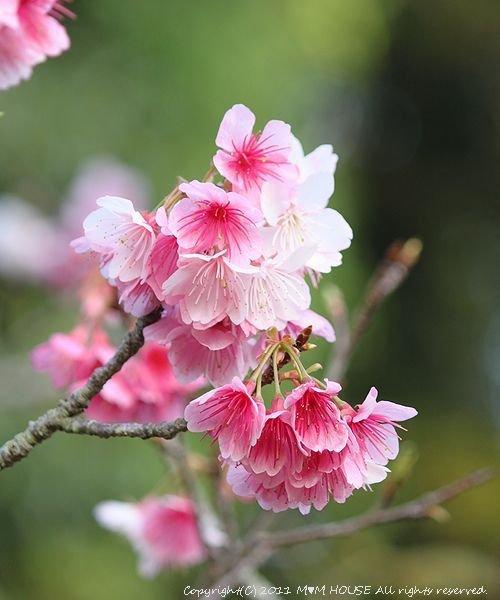 桜便り 第2弾  ☆ ハプニング♪_c0139375_13585014.jpg