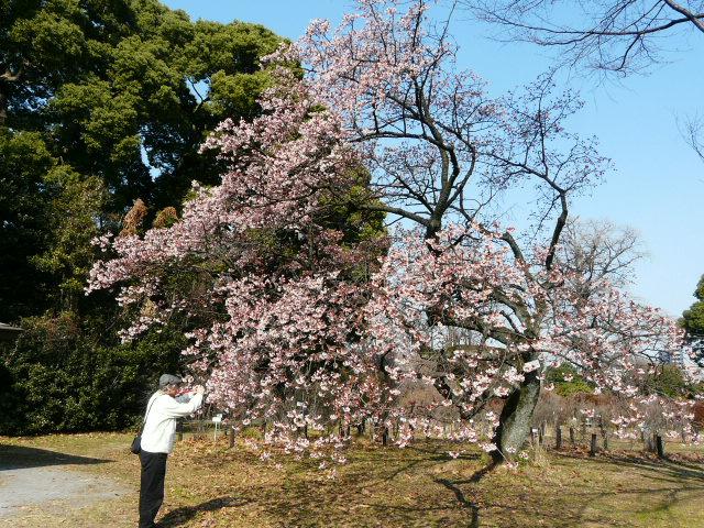 小石川植物園で見られた花_e0145782_9103329.jpg