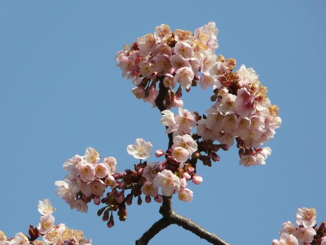 小石川植物園で見られた花_e0145782_9104877.jpg