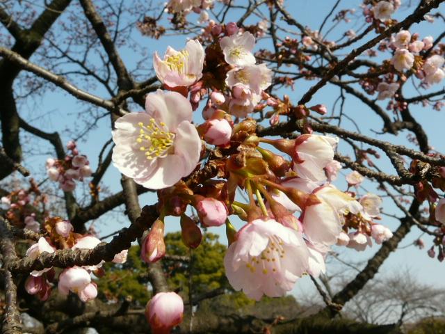 小石川植物園で見られた花_e0145782_9111180.jpg