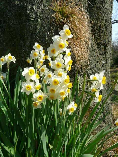 小石川植物園で見られた花_e0145782_9113391.jpg
