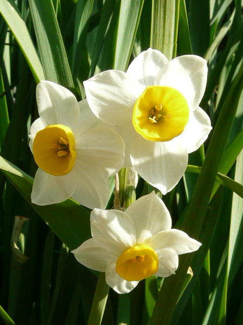 小石川植物園で見られた花_e0145782_9114822.jpg