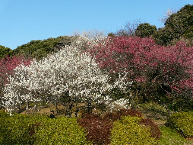 小石川植物園で見られた花_e0145782_9123124.jpg