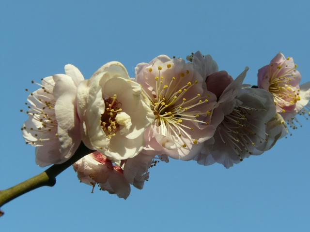 小石川植物園で見られた花_e0145782_9125013.jpg