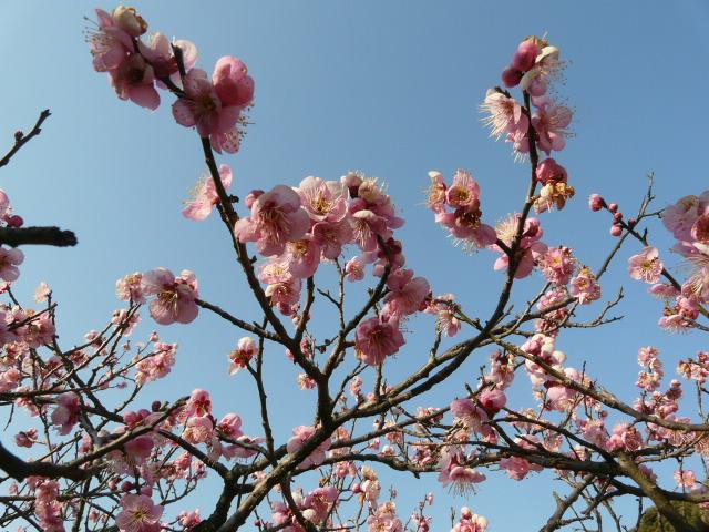 小石川植物園で見られた花_e0145782_91316100.jpg