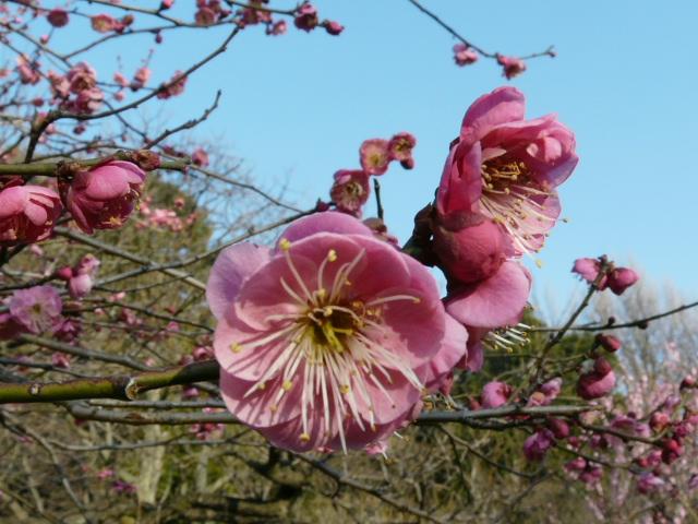 小石川植物園で見られた花_e0145782_9133465.jpg