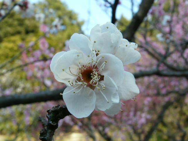 小石川植物園で見られた花_e0145782_9141486.jpg