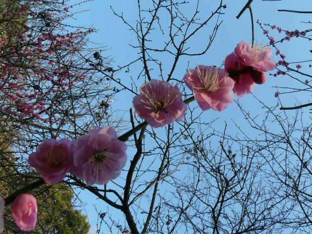 小石川植物園で見られた花_e0145782_9143278.jpg