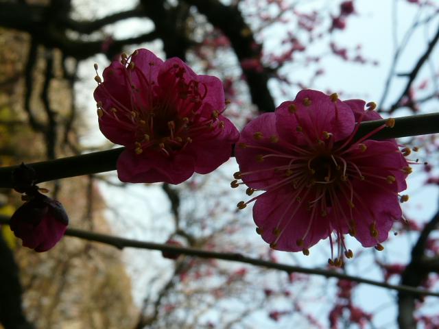 小石川植物園で見られた花_e0145782_9145193.jpg