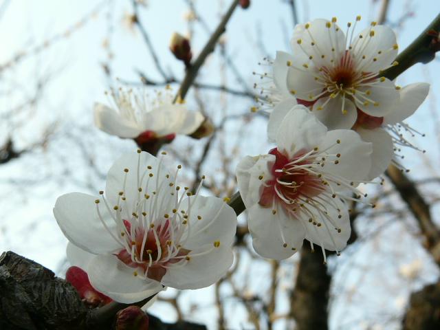 小石川植物園で見られた花_e0145782_9151679.jpg