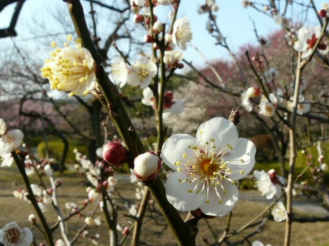 小石川植物園で見られた花_e0145782_9153482.jpg