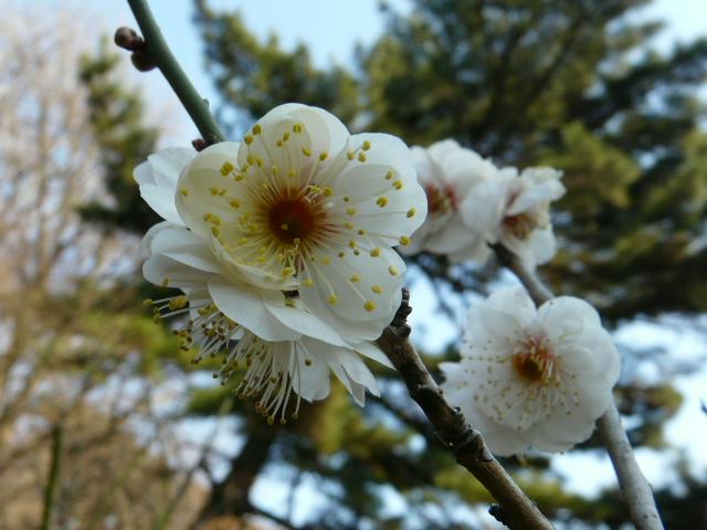 小石川植物園で見られた花_e0145782_9155259.jpg