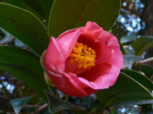 小石川植物園で見られた花_e0145782_9161452.jpg