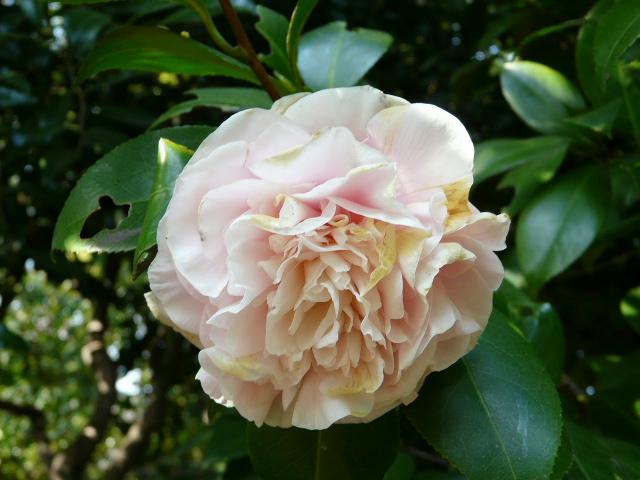 小石川植物園で見られた花_e0145782_9165735.jpg