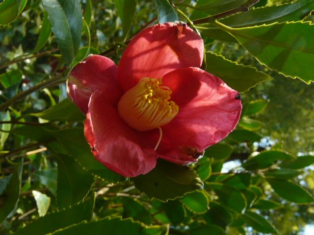 小石川植物園で見られた花_e0145782_917172.jpg