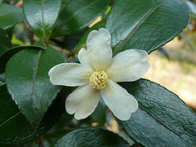 小石川植物園で見られた花_e0145782_91742100.jpg