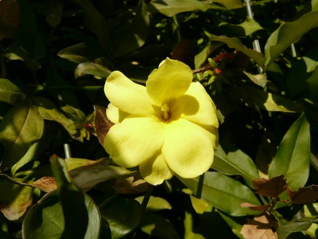 小石川植物園で見られた花_e0145782_9184357.jpg
