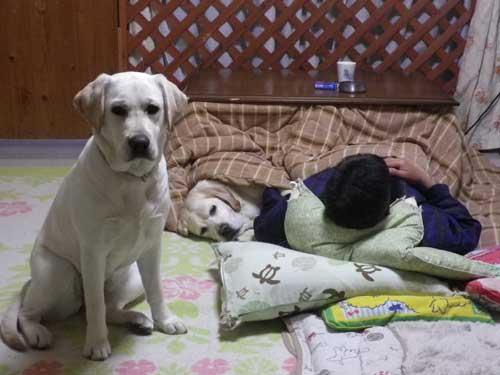こたつ犬_b0145486_21183362.jpg