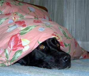 こたつ犬_b0145486_21195845.jpg