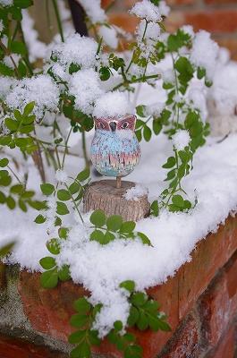 雪景色_c0207890_0162318.jpg