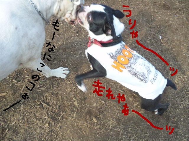 5白黒★舎人ランラン…肉?!ツアー第2弾★ラン編_d0187891_1649111.jpg