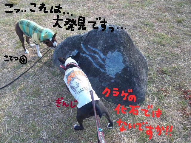 5白黒★舎人ランラン…肉?!ツアー第2弾★ラン編_d0187891_16584191.jpg