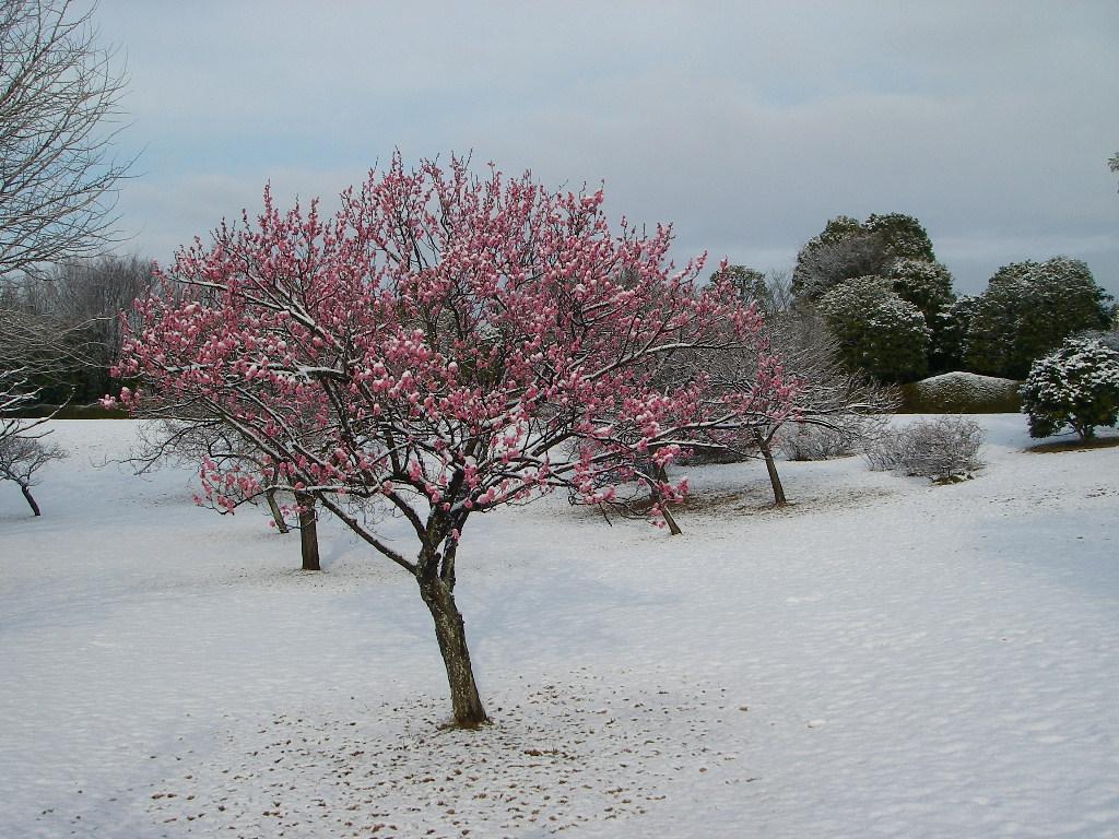 記念公園通信_b0172896_13215232.jpg