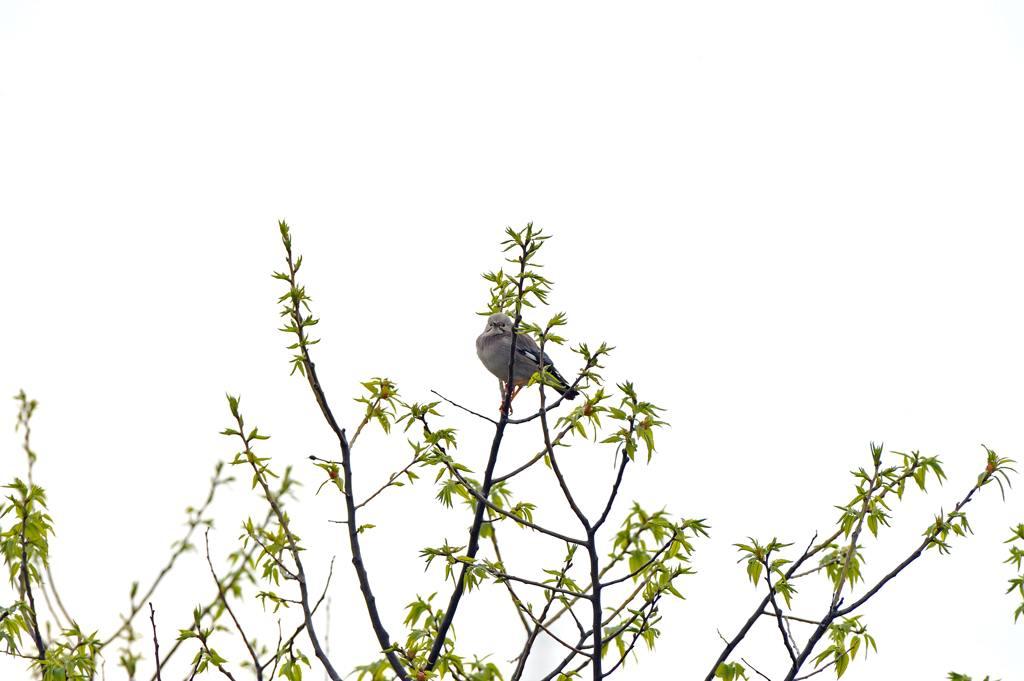 鳥のなる木/CP+/初積雪_b0024798_9123475.jpg