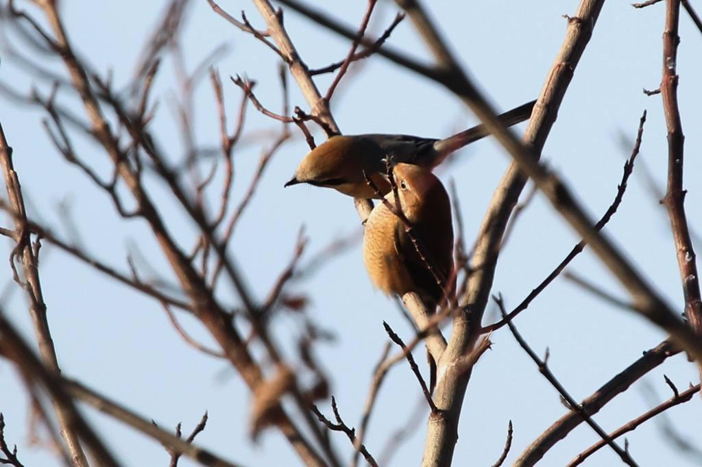 鳥のなる木/CP+/初積雪_b0024798_9142849.jpg