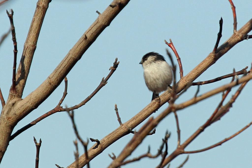 鳥のなる木/CP+/初積雪_b0024798_9144230.jpg