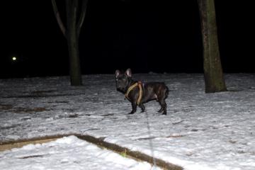雪やぁぁぁ!!_f0136098_0163613.jpg
