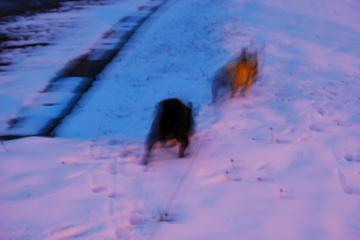 雪やぁぁぁ!!_f0136098_095642.jpg