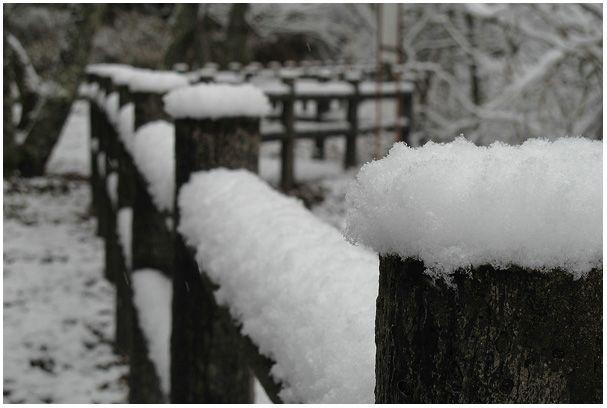 雪を撮ろう_c0042324_21442567.jpg