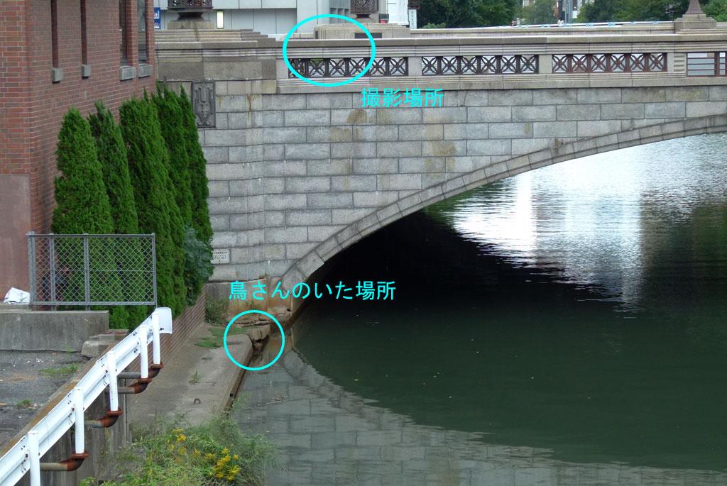 水面に浮ぶ餌をとる ハクセキレイ(街の鳥さんたち)(動画追加2.17)_e0088233_1893755.jpg