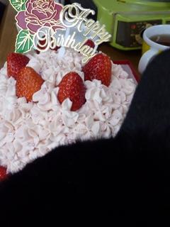 2011年2月11日ゆきねこショップ本日開店 のぇる編。_a0143140_23465861.jpg