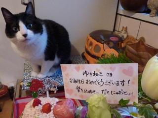 2011年2月11日ゆきねこショップ本日開店 のぇる編。_a0143140_23491246.jpg