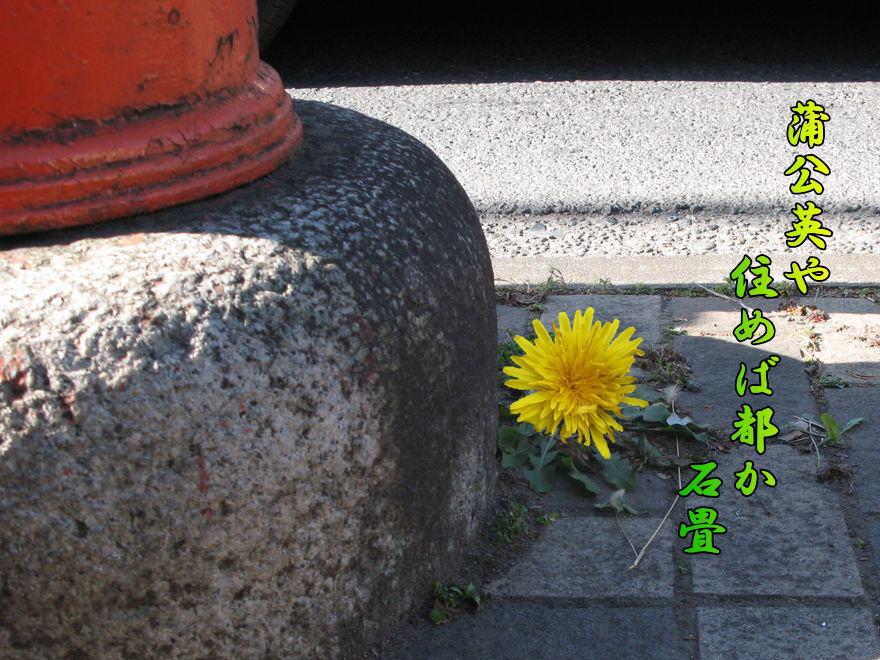 f0137096_1684778.jpg