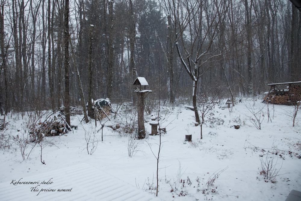 雪少なく極寒日が続く日々_c0137403_21334370.jpg