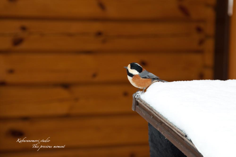 雪少なく極寒日が続く日々_c0137403_21405055.jpg