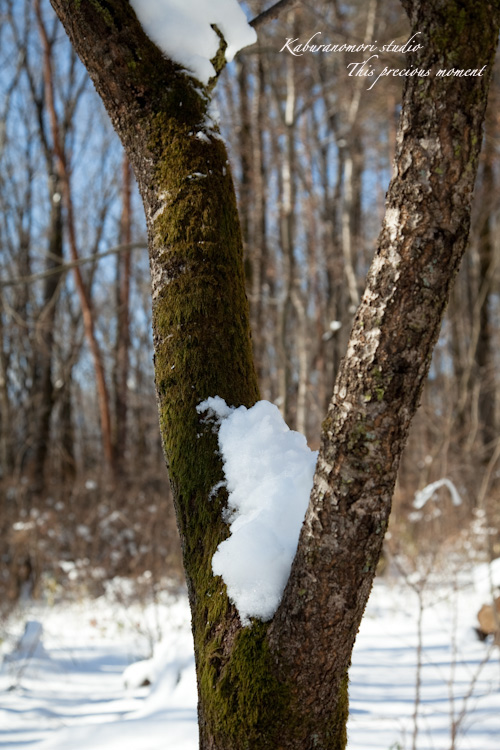 雪少なく極寒日が続く日々_c0137403_2141201.jpg