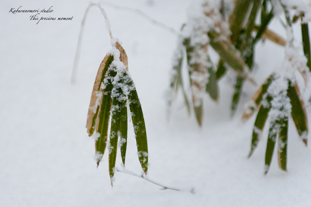 雪少なく極寒日が続く日々_c0137403_21415352.jpg