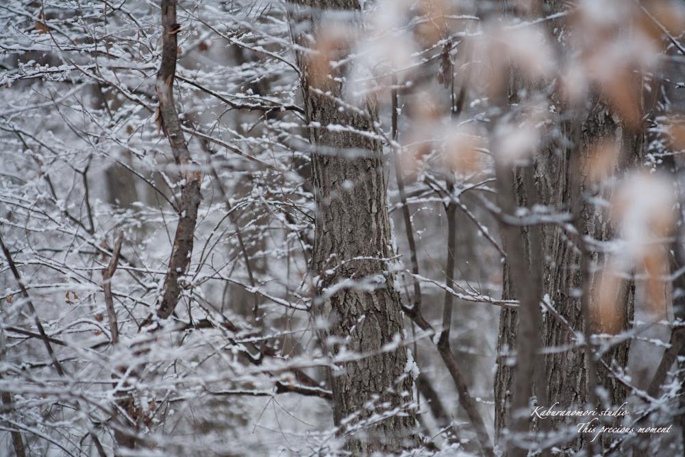 雪少なく極寒日が続く日々_c0137403_21455342.jpg