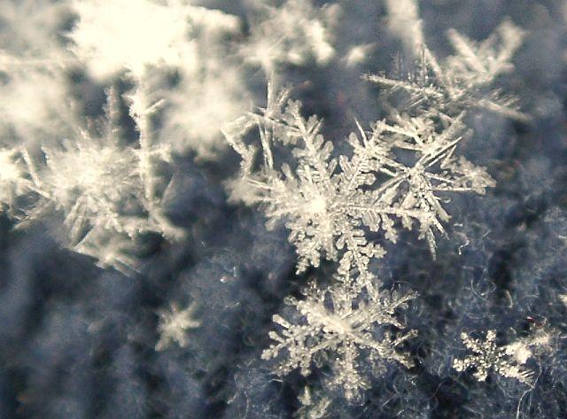 雪降り*;*:_c0173405_221822.jpg