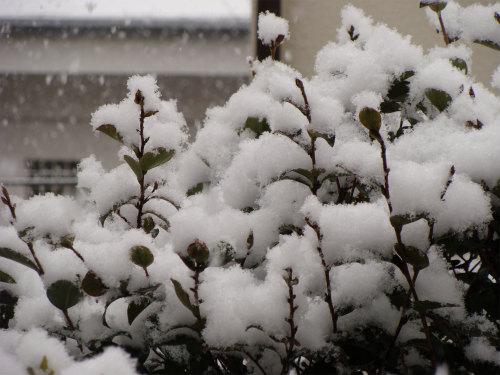 神戸の雪景色_f0223914_174084.jpg