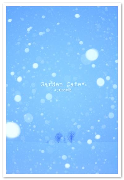 降る雪 ♪_a0097840_11244350.jpg