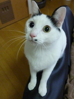 猫のお友だち ランボくんルッチくんサンジくん編。_a0143140_22464643.jpg