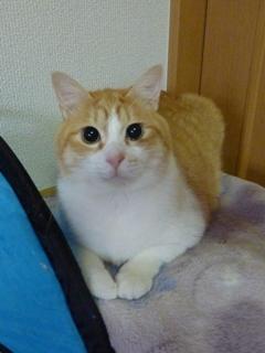猫のお友だち ランボくんルッチくんサンジくん編。_a0143140_22503896.jpg