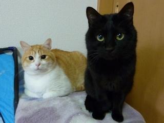 猫のお友だち ランボくんルッチくんサンジくん編。_a0143140_22525651.jpg
